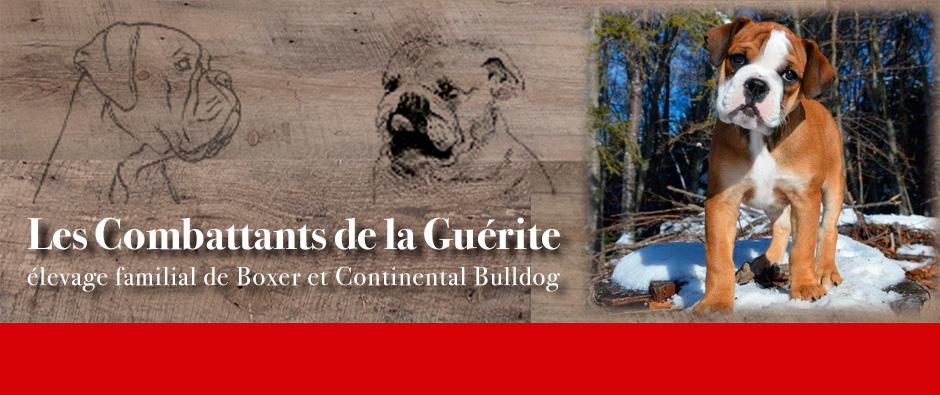 ÉLEVAGE DES COMBATTANTS DE LA GUÉRITE